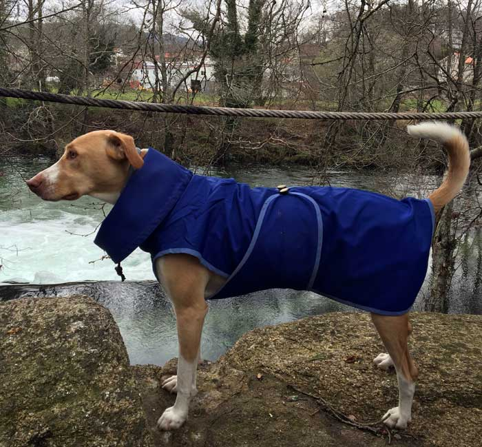 impermeable-azul-perro