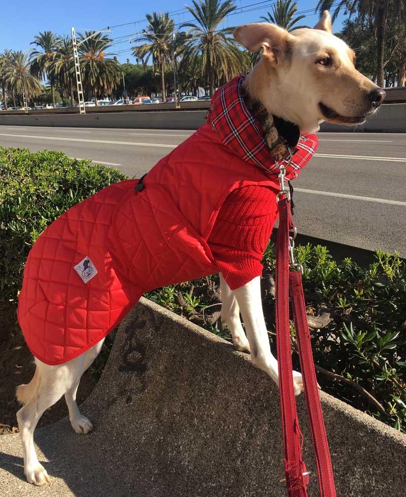 impermeable-rojo-perro