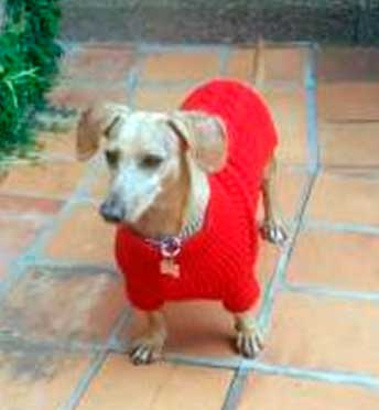 jersey rojo para perro