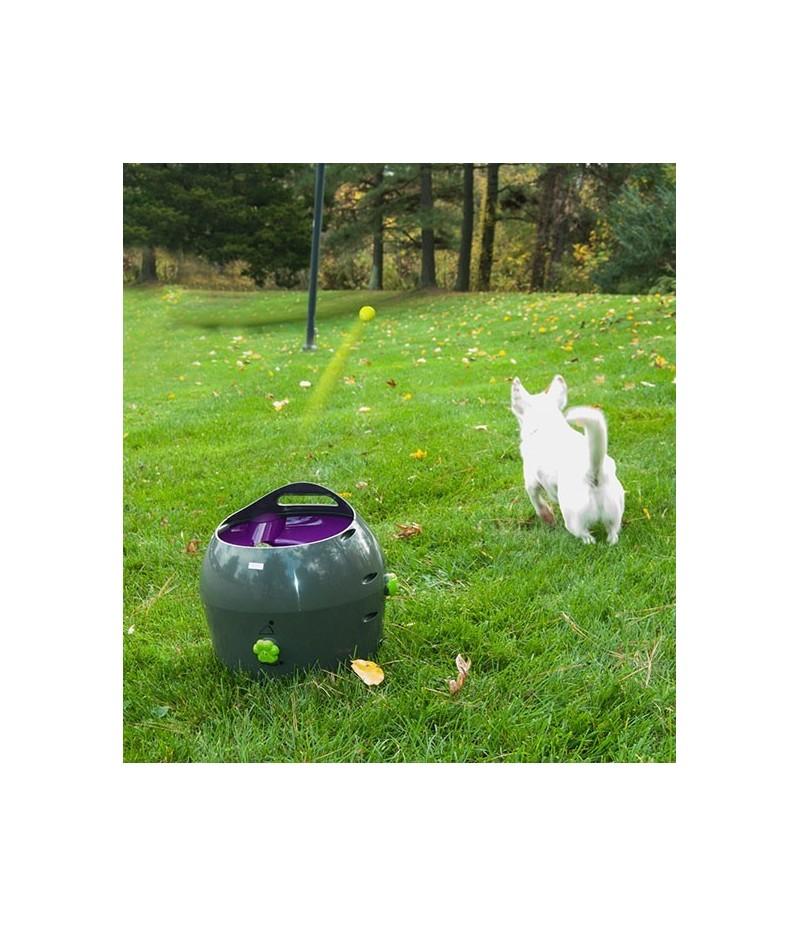 lanzador automatico pelotas perro