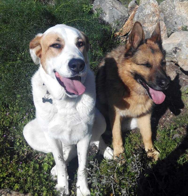 perros amigos de lucas y lola