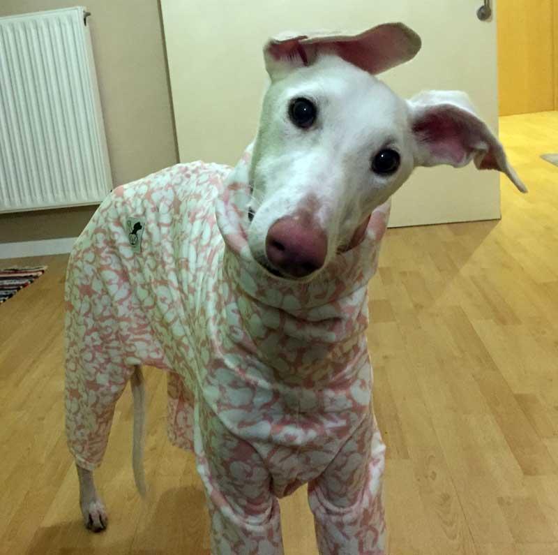 pijama rosa para galgo