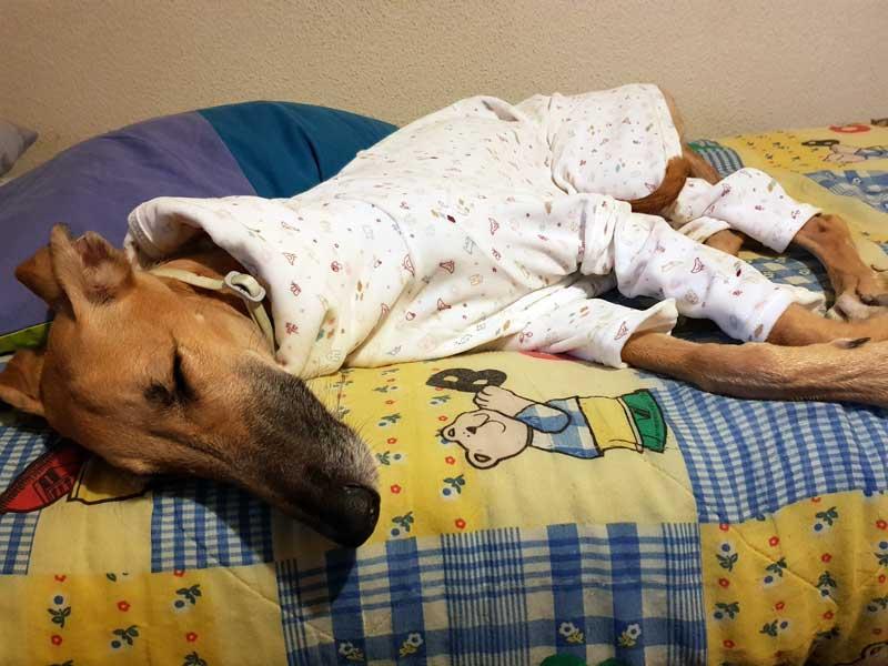 pijama para galgo