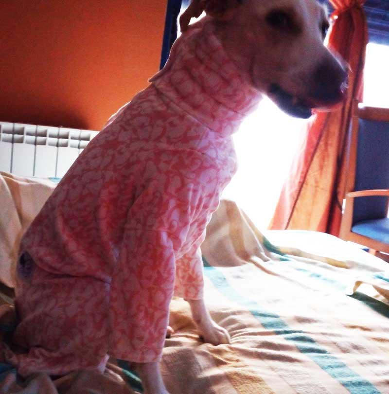 pijama felpa galgo