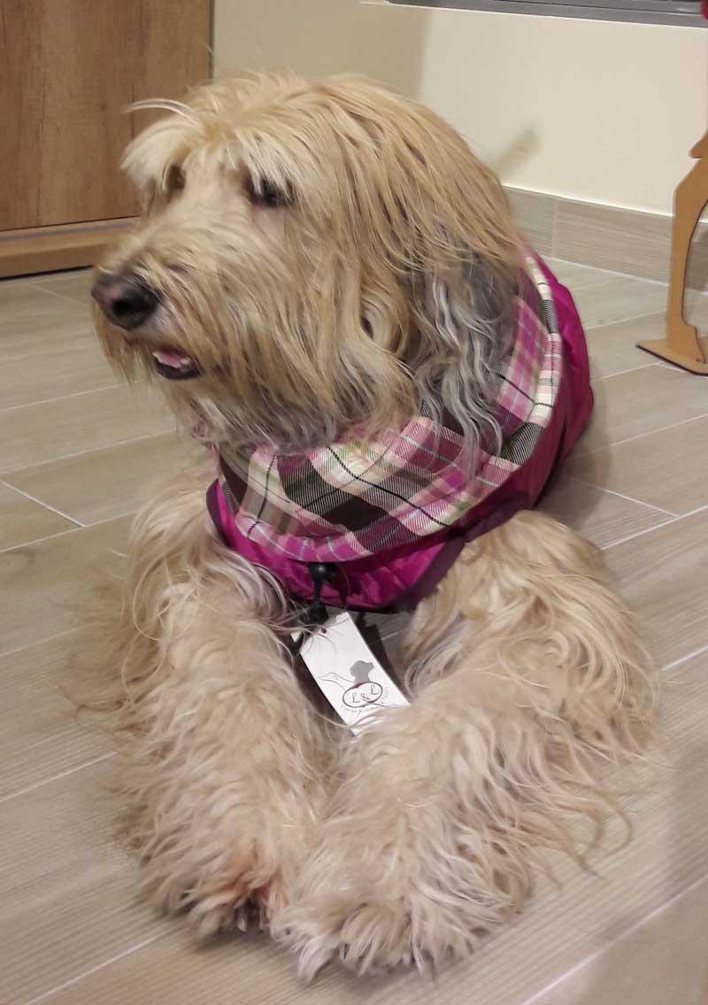 abrigo rosa perro