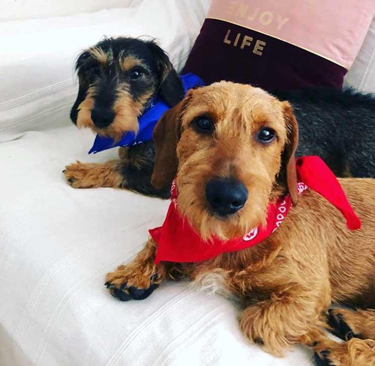 bandana para perro