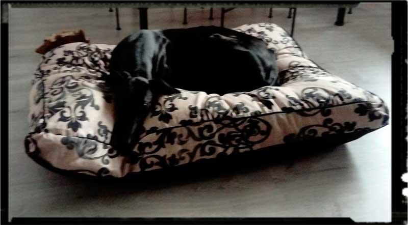 cama especial galgo