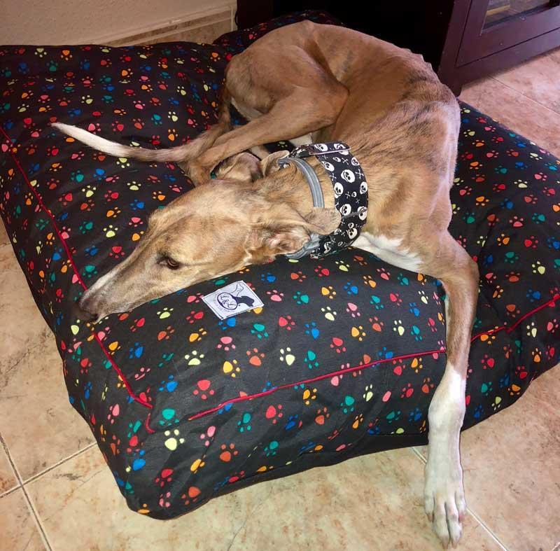 cama especial galgo huellas