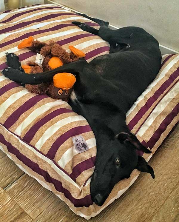 cama especial galgo rayas