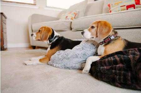 cama multiusos perro
