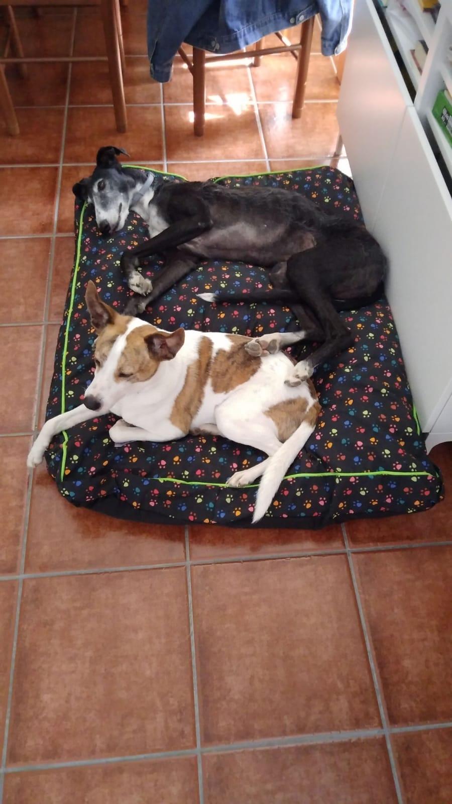Bolo y lola en su cama nueva