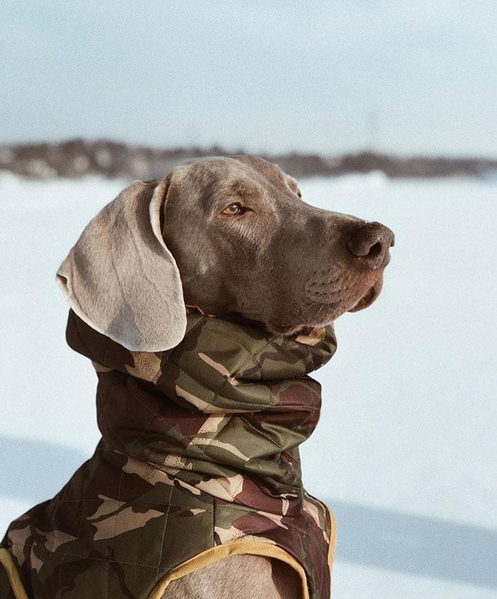 abrigo perro camuflaje