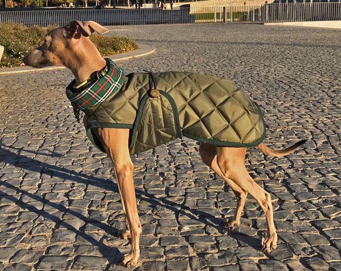 abrigo piccolo verde