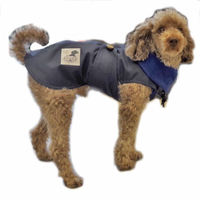 impermeable azul perro