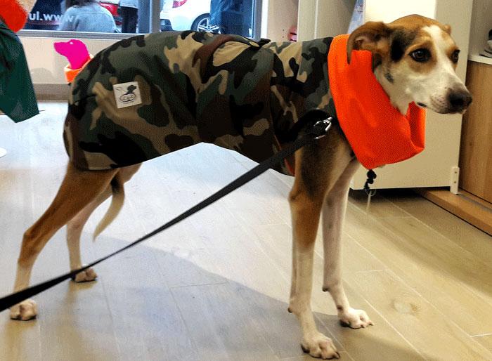 abrigo impermeable camuflaje perro