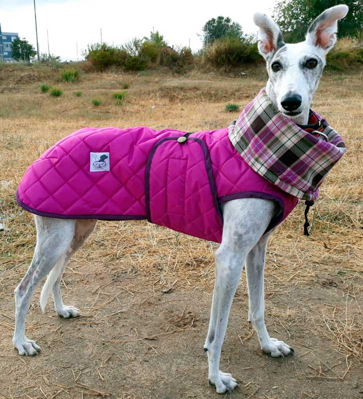 abrigo fucsia para galgo