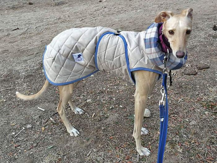 abrigo galgo beige
