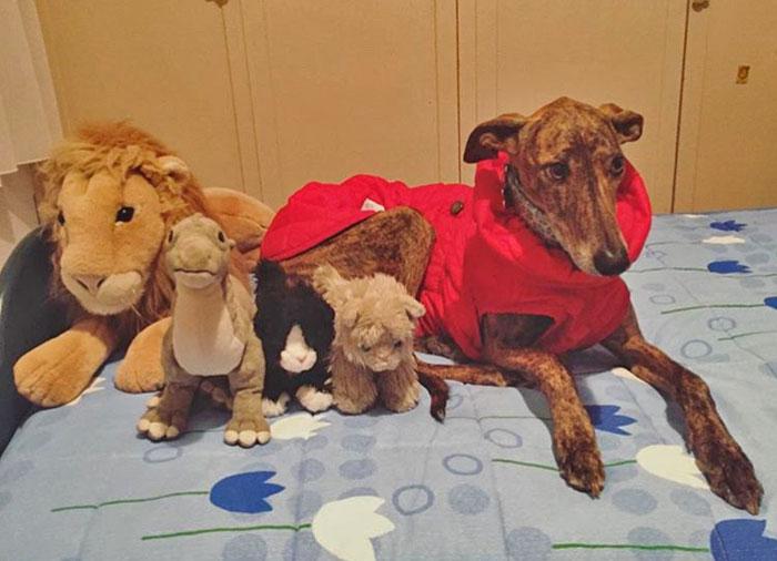 peluches para perros