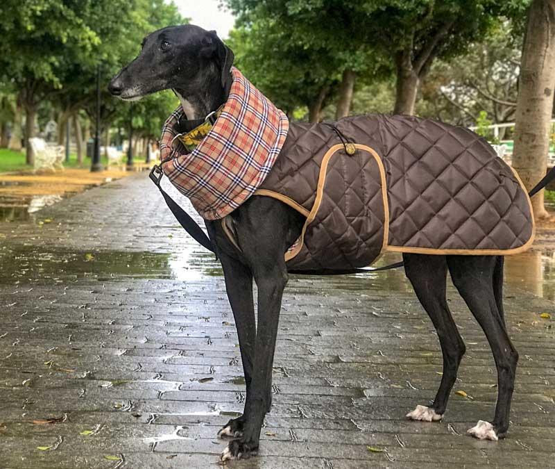 abrigo marron impermeable galgo