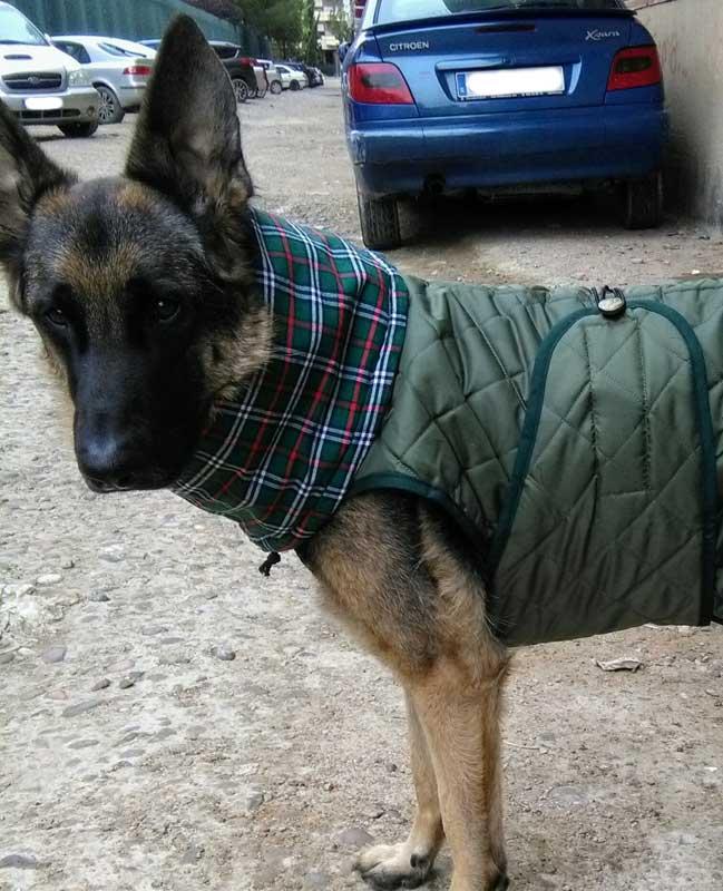 abrigo talla grande perro