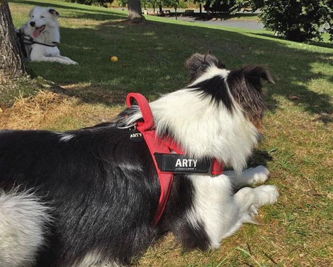 arnes noruego perro
