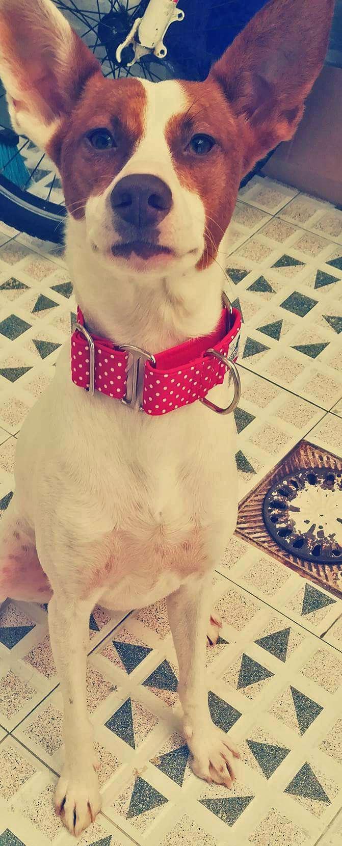 collar perro rojo lunares