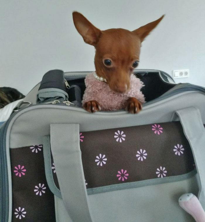 bolso transporte perro mini