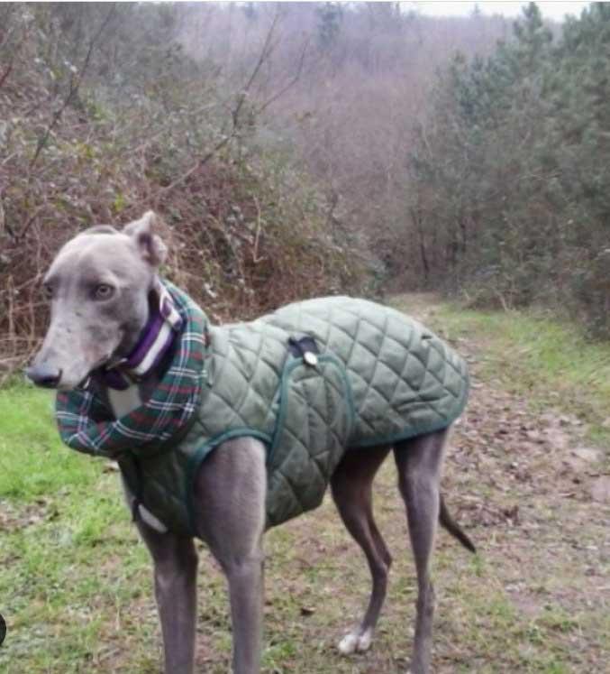 abrigo verde acolchado galgo