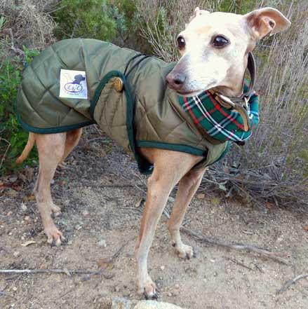 abrigo verde piccolo