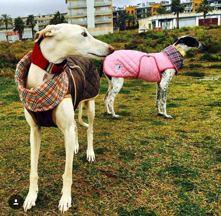 abrigo rosa galgo