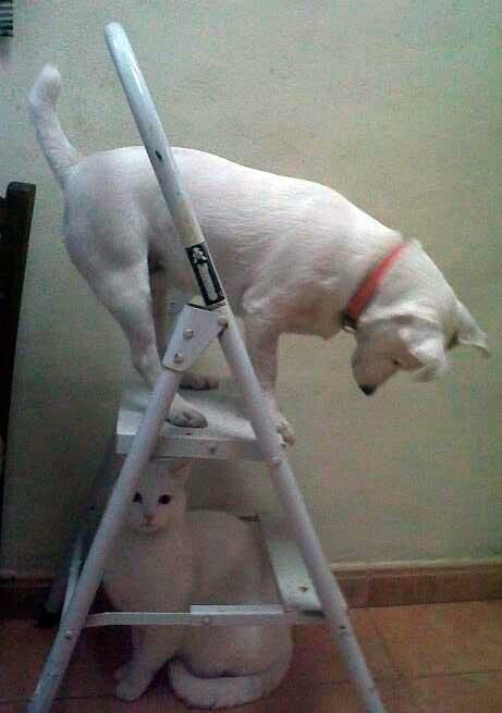 cachorro en apuros