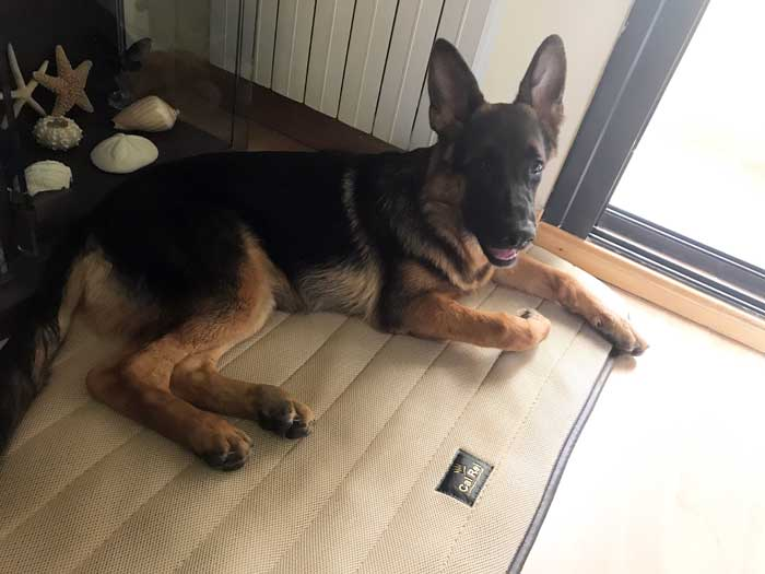 cama cal rei para perro