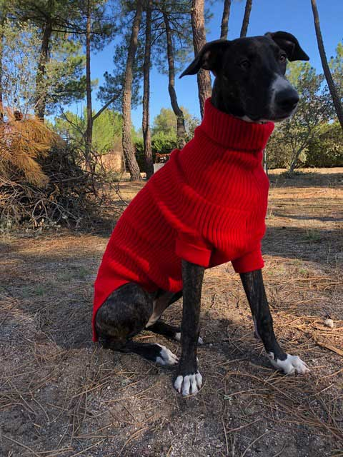 jersey rojo para galgo