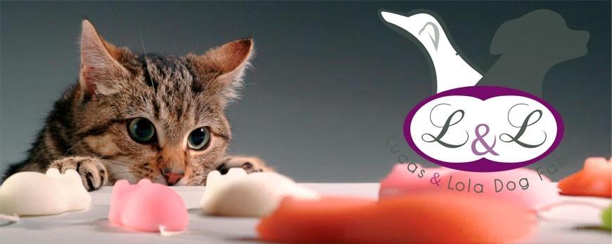 ¿Cómo solucionar el estrés en los gatos?