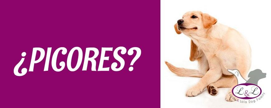 Picores en perros