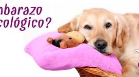 ¿Qué es el embarazo psicológico de una perra?
