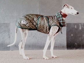 abrigo-para-galgo