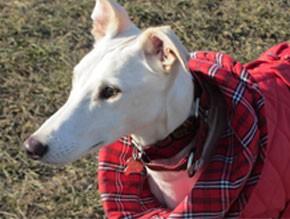 abrigo para perro Cooper