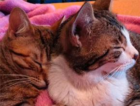 cuidado-para-gatos