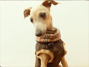abrigo piccolo marron