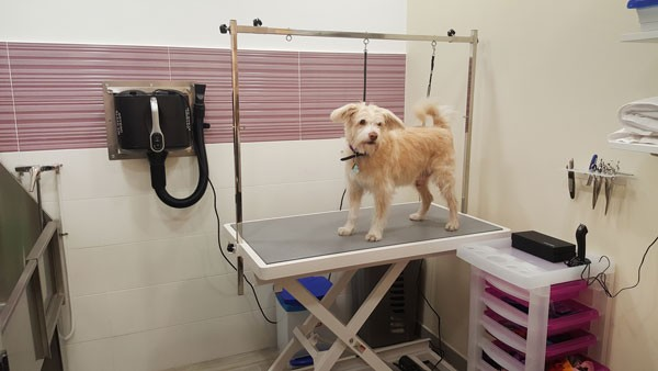 Como bañar a mi perro